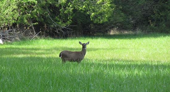 h2-deer
